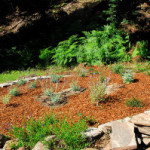 Spring Garden Update: The Native Gardens