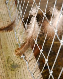 More feathers caught on some fencing