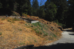 Removing the poison oak, and sick trees, uncovers an old guest house foundation