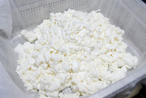 We have no complaints about milk. This batch of feta yielded more than twice the amount of cheese than we expected