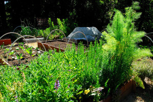 We see MUCH more value in 'dirt'. This is how the garden used to look. This year, a brown, dessicated collection of weeds